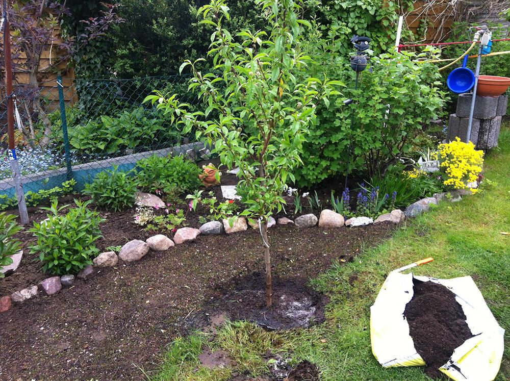 Pfirsichbaum pflanzen kleingarten ideen - Kleingarten ideen ...